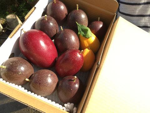 ご家庭用パッションフルーツ約1.5kg
