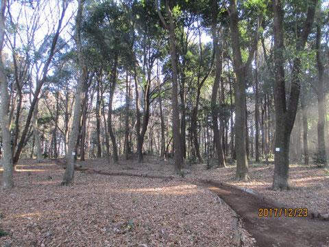 活動地の朝です。林の向こう側が透けて見えます。