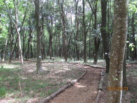 活動地の地面も緑が増えてきました