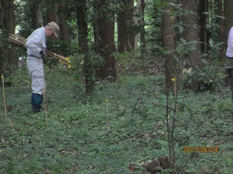 竹の棒で貴重植物に目印をつける作業は根気が勝負です