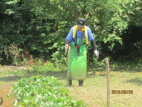 サツマイモ畑の囲いを作る作業
