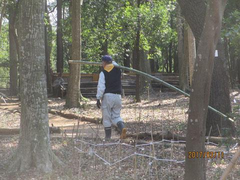 柵の改修に使う竹を運びます