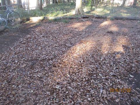 この落ち葉をきれいに堆積場に運びました