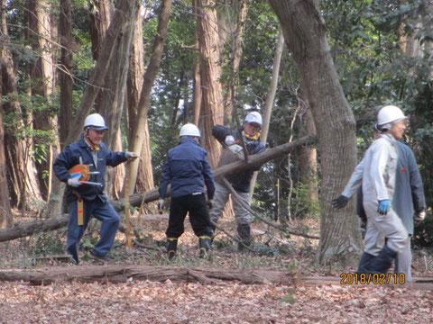 倒した木の枝を切り落としています