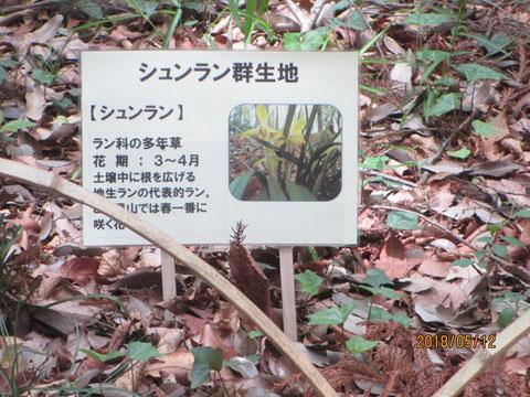 植物の名札には、花の写真を載せて、見てもらいました