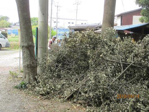 かなりの枝の量でした