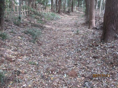 裏の道は枯葉が積もっています