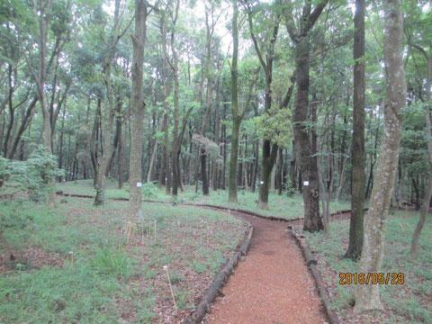 前日の雨で、樹木も生き生きしています