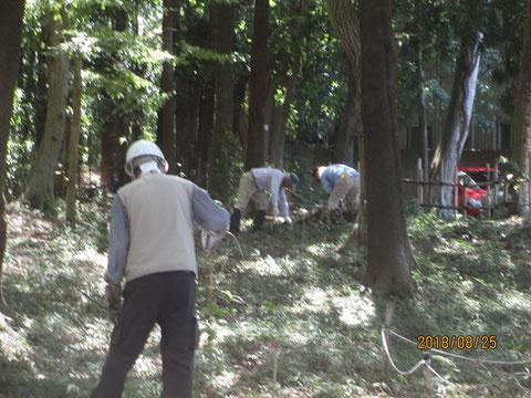 除草や清掃作業ですが、腰をかがめての作業もあります