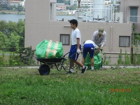 夏ボラ体験で、涼しい内に刈った草を集めて、運ぶ作業をやってもらいました