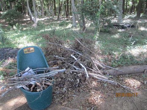 枯れ枝が沢山落ちていました