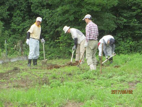 サツマイモを植えるための圃場作りです