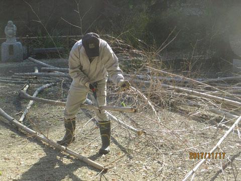 切った竹は枝を払い落し、長さを揃えます