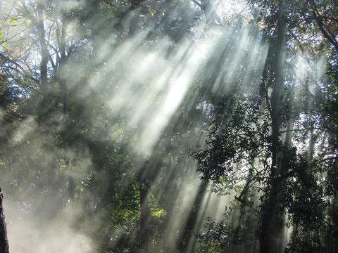 煙による幻想的な森の情景