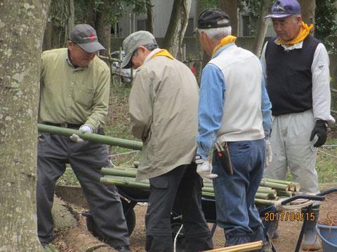 柵の修理に使う竹等を準備しています