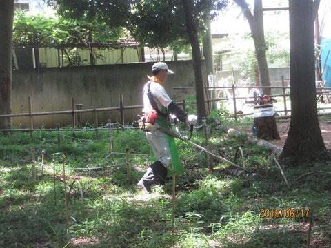伸びた下草を刈り払い機で刈っています。貴重種を残しながらの作業です。