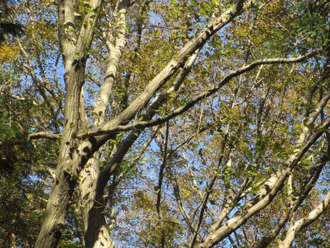 枯れ枝が横になって、引っかかっています