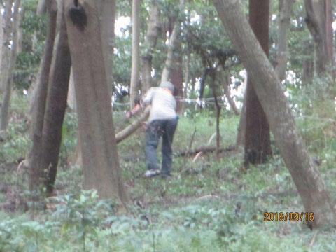 相変わらず枯れ枝等が多く、取り除く作業も続きます