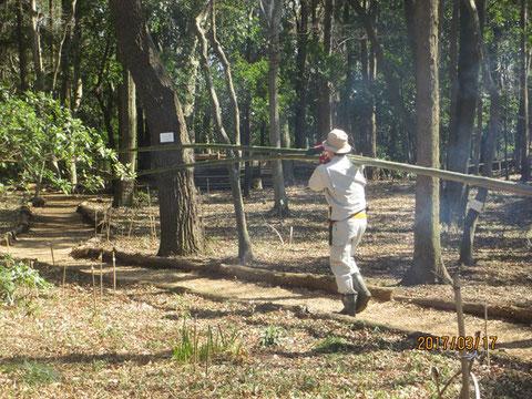 柵の竹が足りなくなり、近くの竹林から運んできました