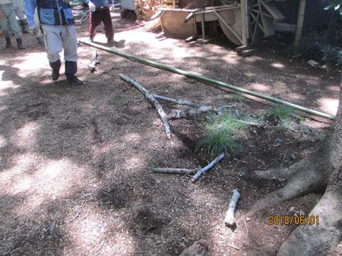 みごとに枯れ枝を落とすこと出来ました