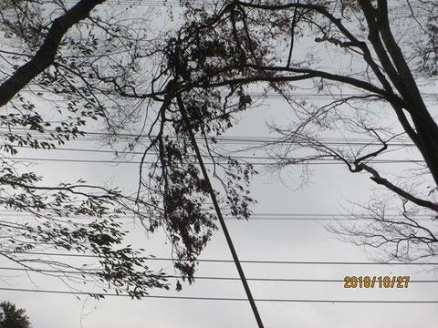 活動地の入り口の上に、引っかかっている大きな枝