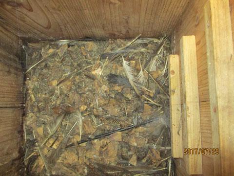 巣箱の中です