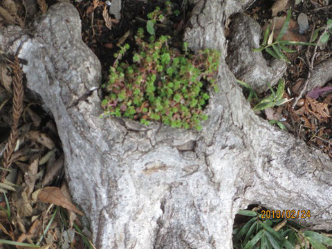 木の株の根元に春が芽生えています