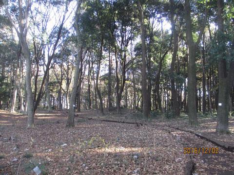 活動地の落ち葉の堆積がすごいです