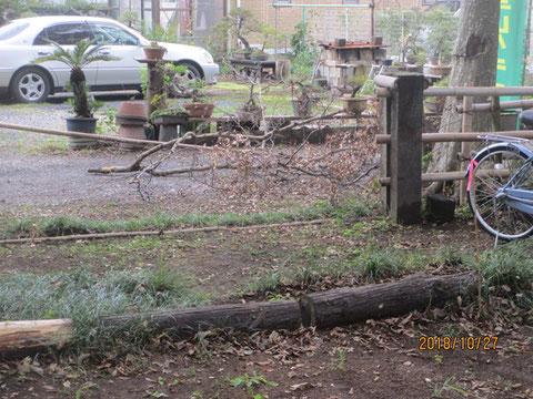 かなり大きな枝を落とすことができました