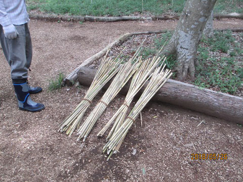 沢山の矢竹を用意しました