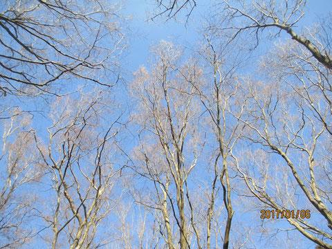 空は気持ちの良い青空です