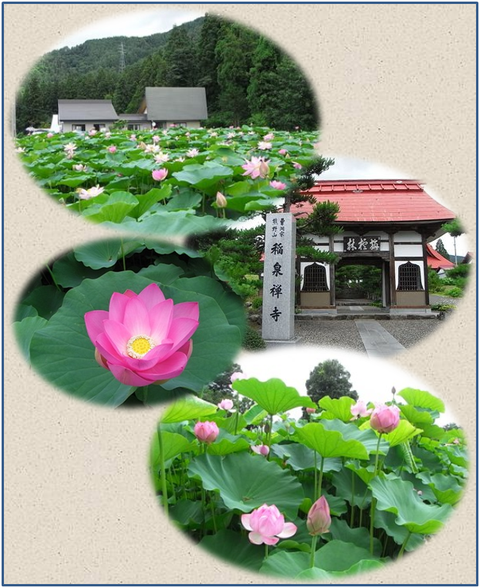 稲泉寺のハスの花