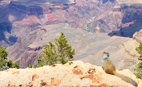 Foto: Grand Canyon Nationalpark