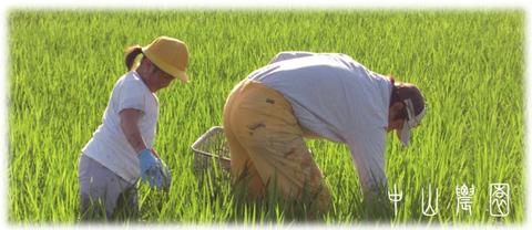 手作業による草抜き