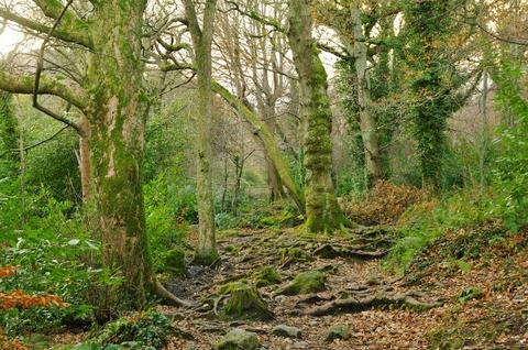 アイルランド 北アイルランド 旅行 森