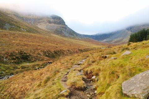 アイルランド 北アイルランド 旅行 ハイキング ヒース