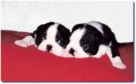 Amore und Augustus   *4. August 1998
