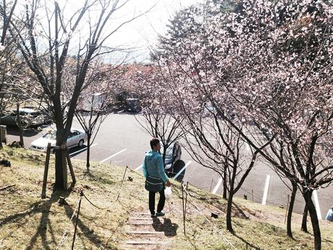 10月桜愛でる