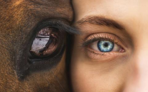 EquiValence©  Horse coaching médiation équine équithérapie