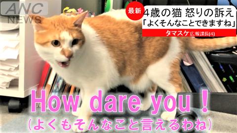 モノ言う消防設備猫