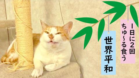 タマスケ 七夕