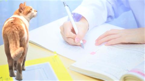 危険物乙4の受験勉強の方法