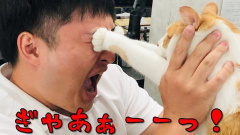 タマスケ 猫 目つぶし 人間