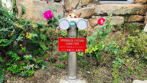 送水口の見た目 連結送水管