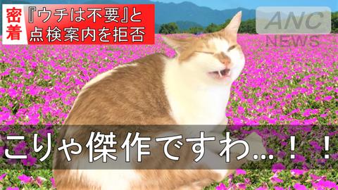 傑作お花畑タマスケ広報課長