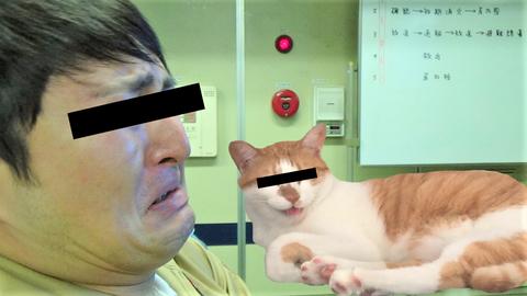 悔しがる人と嘲笑う猫