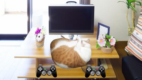 ゲーム機本体 タマスケ広報課長 猫