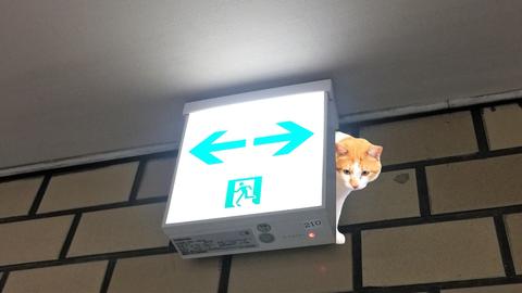 両矢印の通路誘導灯
