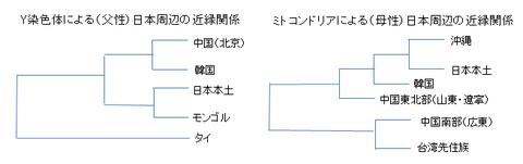 DNAから見た日本周辺の近縁関係