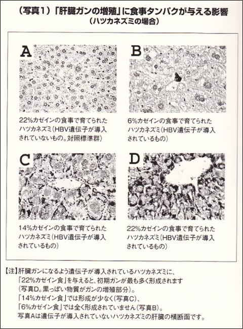 カゼインの投与量と癌細胞の成長